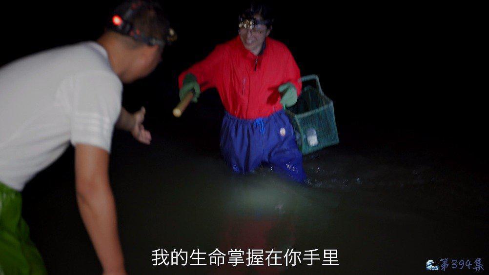 大退潮到底能抓多少种海鲜?海兔,皮皮虾,河豚鱼,海螺应有尽有