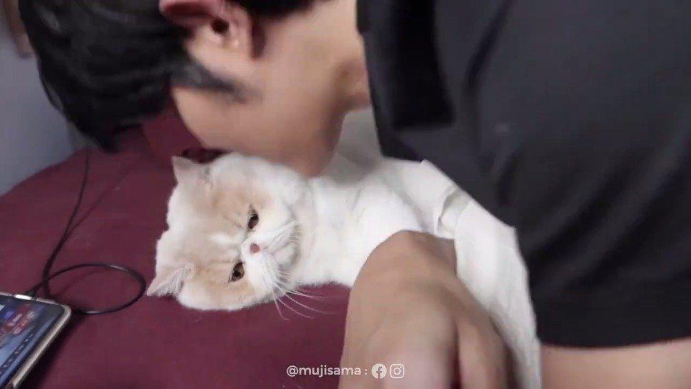 泰国小哥的猫咪mumaruu,是一个喜欢抱着手臂撒娇的粘人精……