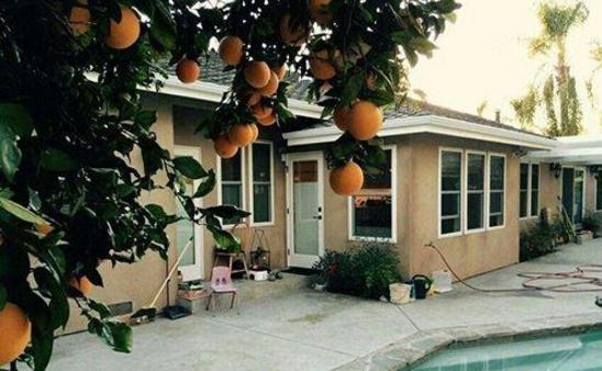 归亚蕾美国豪宅曝光:室外有游泳池有果树