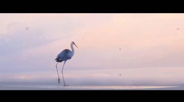 最牛学生动画短片《冰层之下》!