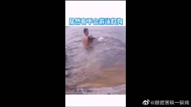 居然有不会游泳的狗,哈哈哈,原谅我不厚道地笑了