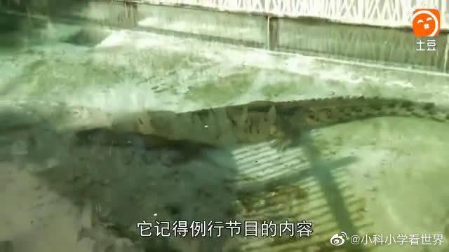 惊天巨鳄——疯长的恐怖(三)