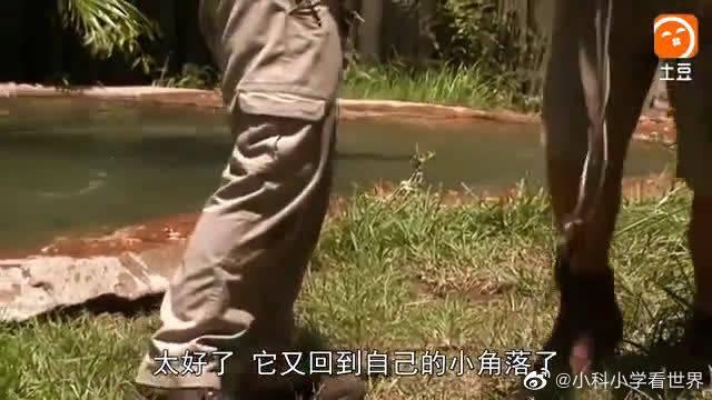 惊天巨鳄——疯长的恐怖(五)