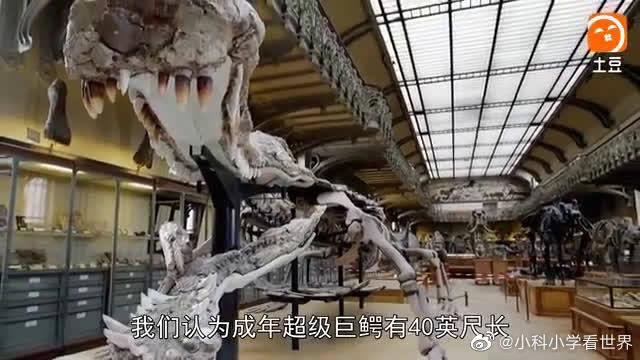 惊天巨鳄——疯长的恐怖(六)