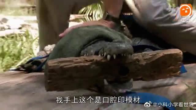 惊天巨鳄——疯长的恐怖(四)