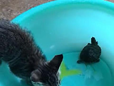 主人回家发现猫咪在喝水,凑近一看,家里面的乌龟受委屈了