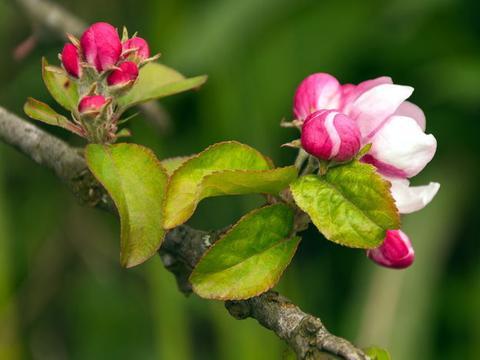 7月下旬,红鸾将至,桃花随风摇,旧爱相逢,重坠爱河的四大星座