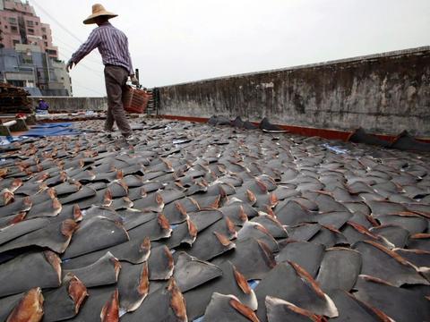 """日本渔民每天早起""""铺瓦"""",走近看清之后,现场人员瞬间目瞪口呆"""