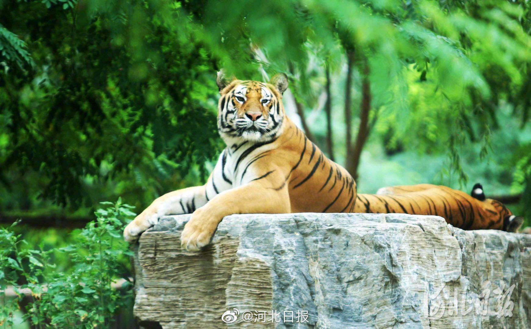 """秦皇岛野生动物园7月15日全新开园 新降生小动物等你来""""庆生"""""""