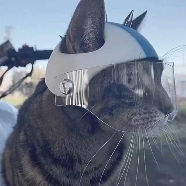 为了安全出行,网友用3D打印机给自家猫咪做了一个机车头盔……