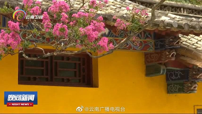 黑龙潭公园:紫薇古树花开正艳 花期将持续45天左右