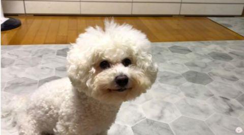 听说这只狗很像我?亲自和狗狗作比较的圭贤!网友:左边也是你吧