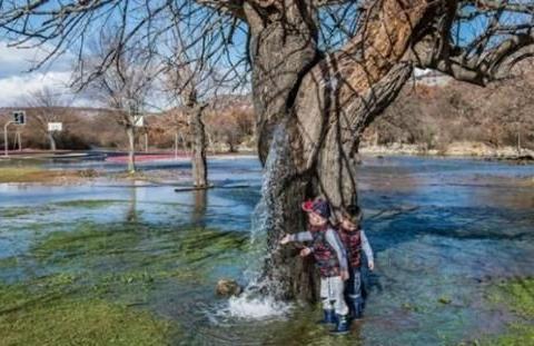 """世界上最神奇古树,几十年从未停止""""喷水"""",网友:这也太神奇了"""