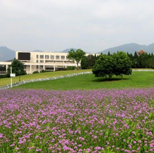 2020年招办主任来帮忙丨重庆师范大学招生就业处处长党亚莲访谈