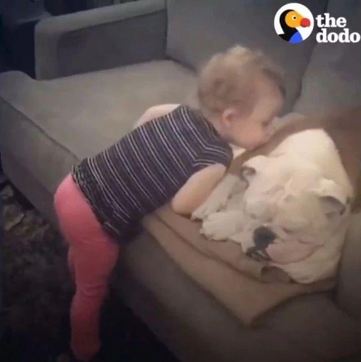 陪伴小宝宝一起长大的狗狗,这些画面太暖了