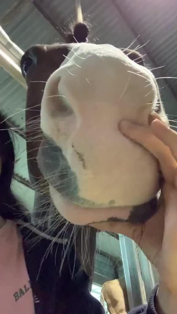 马的嘴真的这么柔软吗