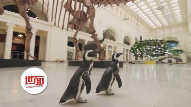 疫情期间企鹅参观博物馆看恐龙