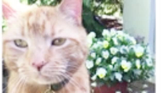 英国议员接受采访被猫挡脸:把你尾巴放下来