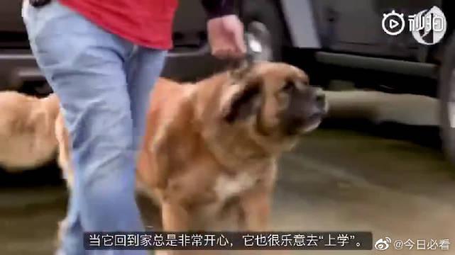 """小哥突发奇想弄了一辆""""狗狗校车""""……"""