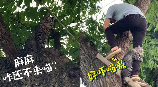 可可爱爱!猫咪走失被困树上 被救时死死抱住救援人小腿