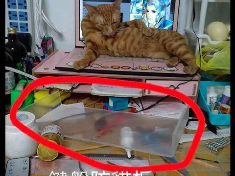 网友买了个键盘防猫板,结果一点用处都没有,猫:防得住算我输!