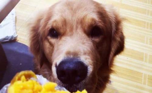除了吃狗粮,狗会吃得越来越健康