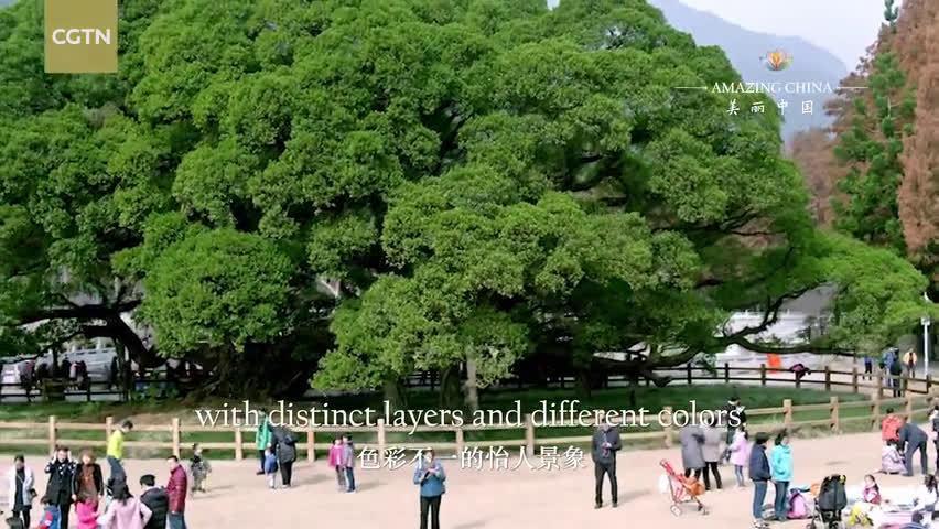纪录片 ——榕树的城市