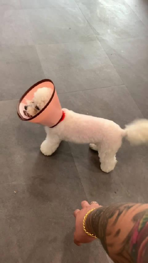 今天训练的第一只小狗子,我看她一眼就融化了……