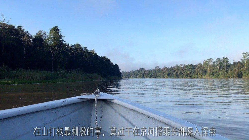 出发沙巴山打根京那巴当河巡游,长臂猿与犀鸟呼唤着你……