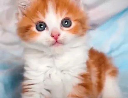 感动!差点安乐死的瘫痪猫咪被好心人收养,6个月后竟学会了走路