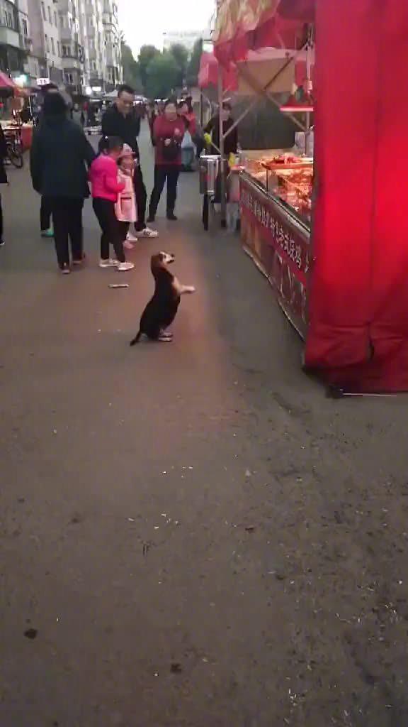怀孕的狗妈妈:有手艺到哪儿都有饭吃