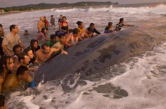 游客发现大型生物搁浅海滩,纷纷脱掉衣服冲进海里