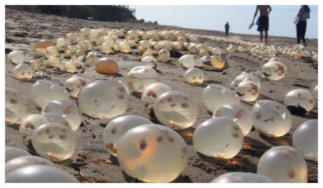 """海滩上发现""""珍珠"""",游客疯狂捡拾难阻止,得知真相后纷纷丢弃"""