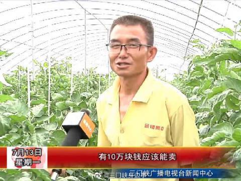 三门峡陕州区张茅乡东村:千亩蔬菜大棚铺就脱贫致富路