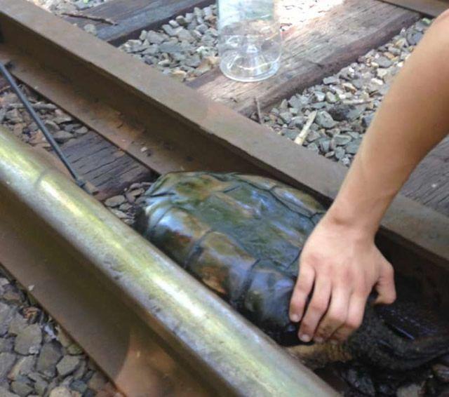 """小伙铁轨上发现""""奇石"""",上前仔细查看后,瞬间慌神了"""