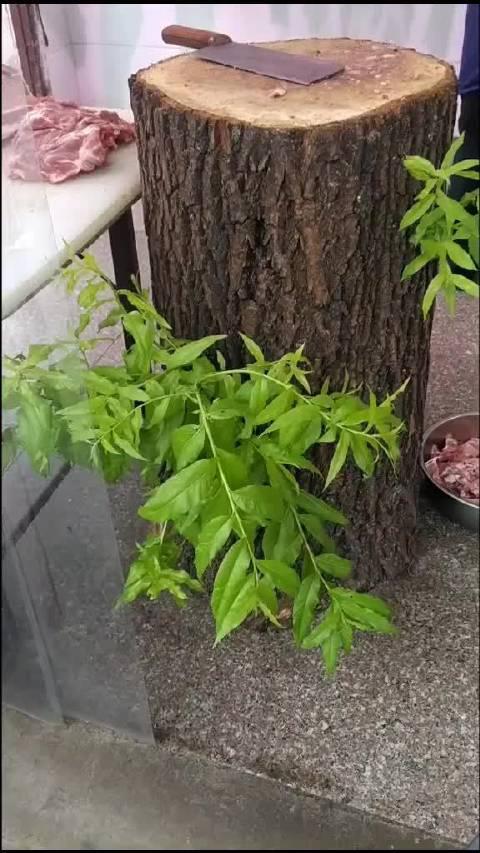 这是这棵柳树对这世间有的千般不舍……