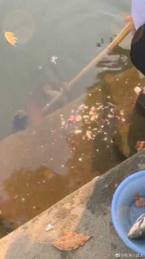 在河边刺鱼,没想到发生这样的事,幸亏我机智