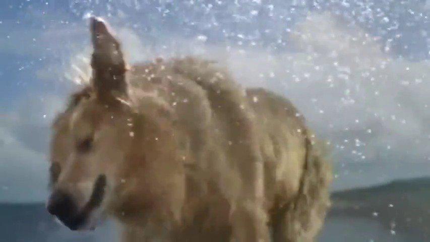 BBC纪录片《狗的秘密生活》豆瓣9.1狗狗如何看待世界……