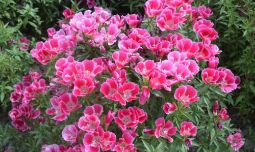 出门捡点东西,都是养花宝贝,促生根助开花,啥花都喜欢!