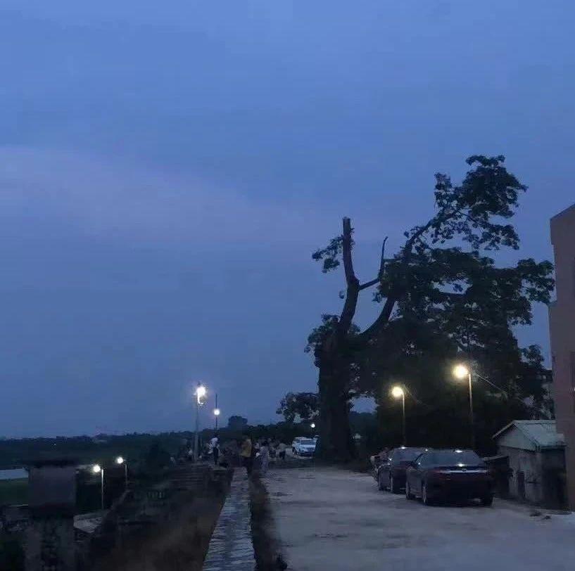 【街市】澄海这两个镇拆迁面积超过4000平方;网红木棉树树被雷电雨劈掉一半;潮汕某水库再现四百多年明朝古村落遗迹;