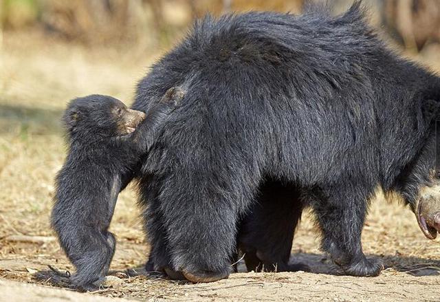 家里有二胎熊孩子的是什么体验?看了这个懒熊妈妈就知道