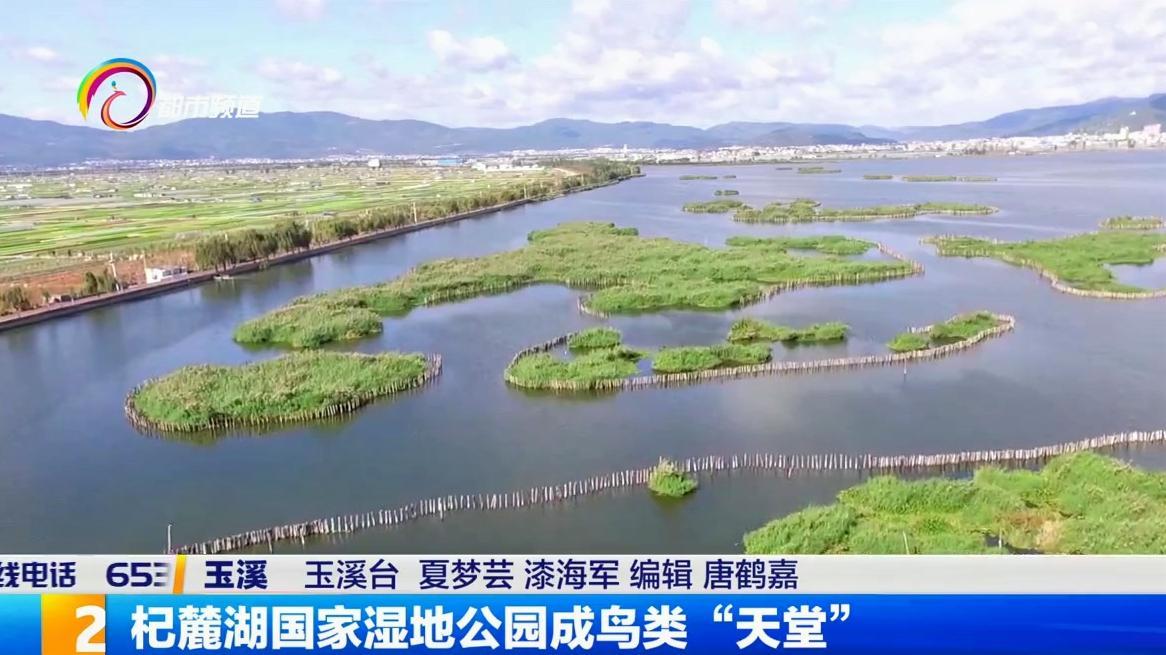 """杞麓湖国家湿地公园成鸟类""""天堂"""""""