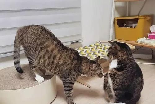 你以为它只是好奇,可它是在病态的吞食,猫咪异食癖你了解多少