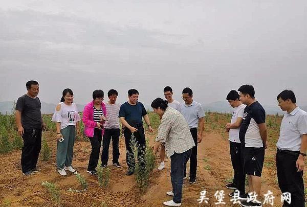 """吴堡县邀请西北农林科技大学专家为艾草产业发展""""把脉问诊"""""""