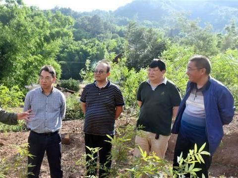 省林业和草原局指导组到鲁纳乡指导花椒产业发展