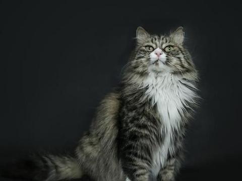 猫咪排尿频繁尿量特别少