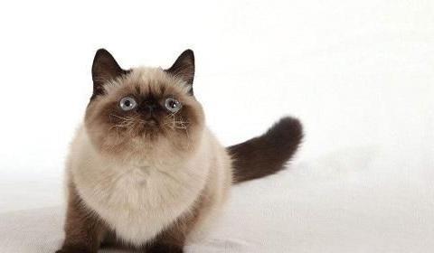 猫咪夏天尿量明显减少