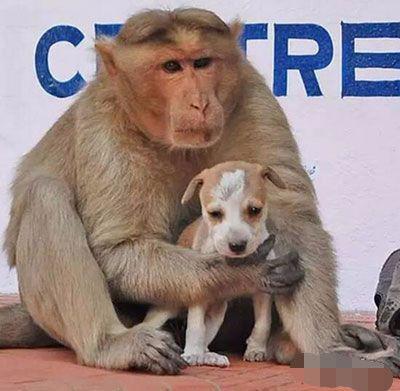猴子妈妈对流浪幼犬爱护有加,附近村民却替它们担心不已