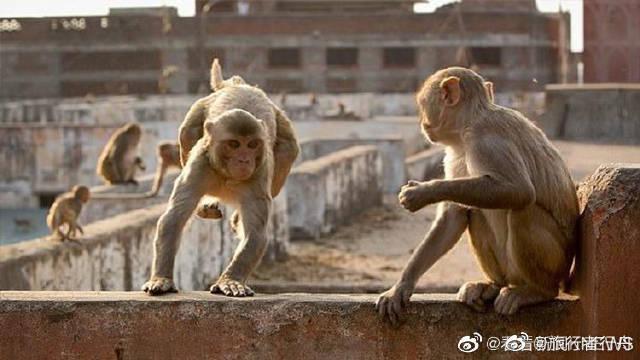 妈妈带6个孩子在院子里睡觉 猴子摇塌院墙砸死一家五口 据《每日邮报》