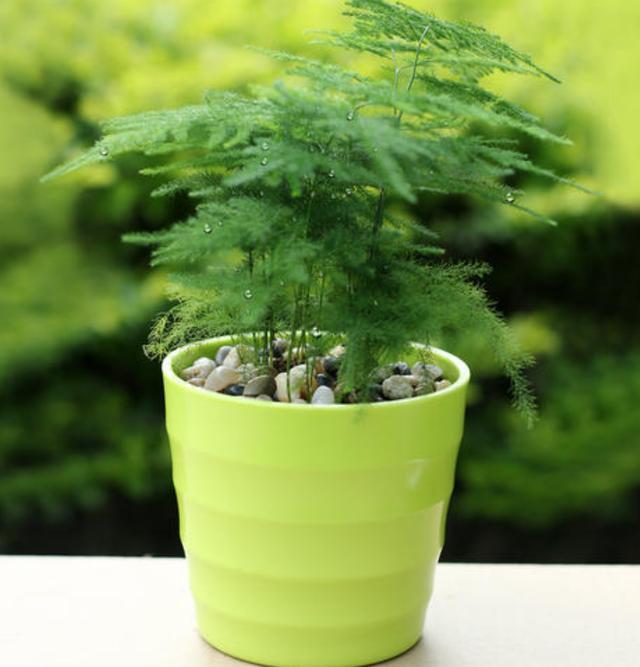 杜鹃花、栀子花、文竹、发财树,养殖最易出现的问题大汇总